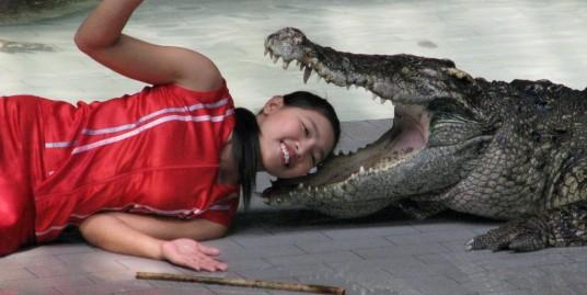 پارک تمساح ها پاتایا