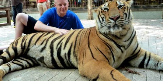 Big-Tiger-2-gititour.com
